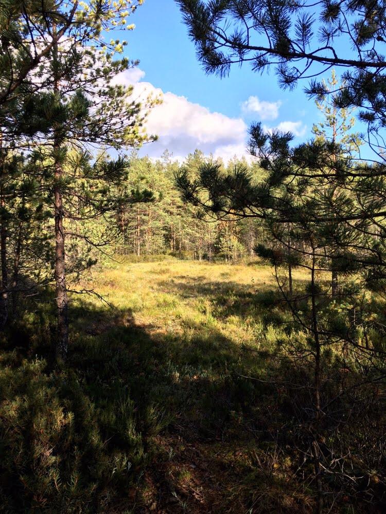 Slåttmosenin luonnonsuojelualue Helsingin Jakomäessä syksyllä 2018.