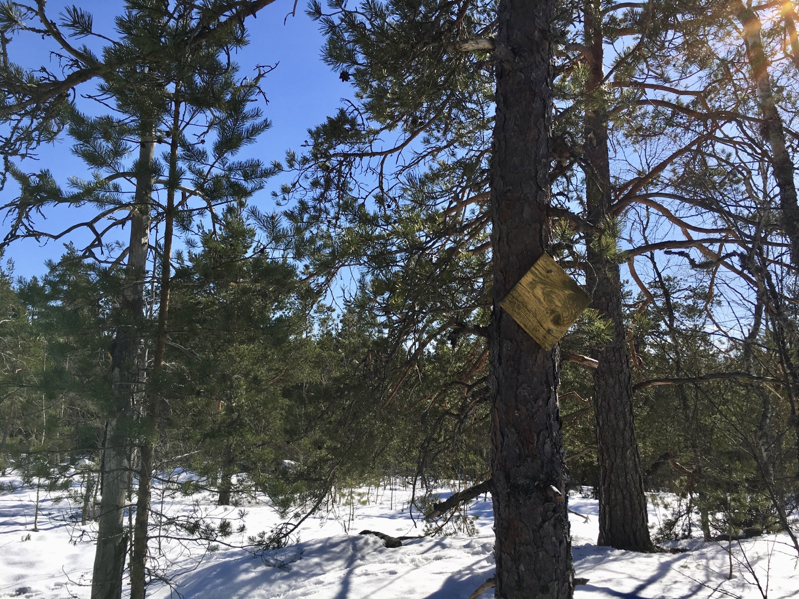 Metsää Nuuksiossa maaliskuussa 2018. Reittimerkit Korpinkierroksella on keltaisia.