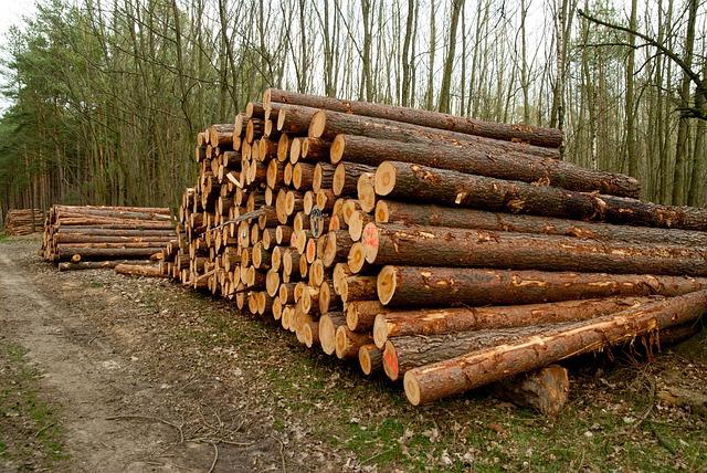 Puut odottamassa kuljetusta tehtaalle tai sahalle.