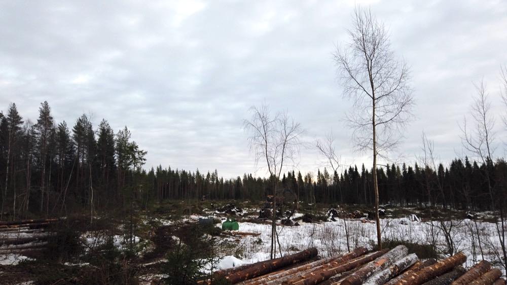 Hakkuualue. Metsänuudistaminen tulossa.