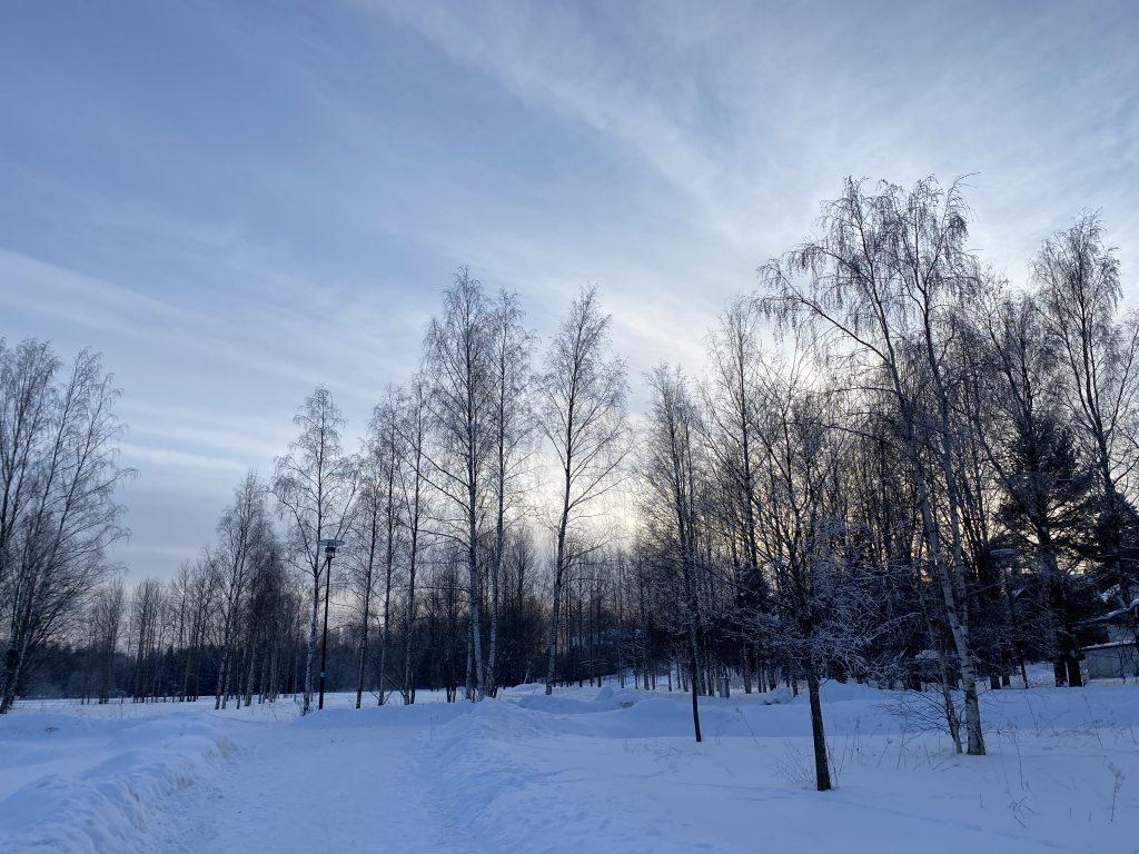 Talvinen luonto Vantaalla